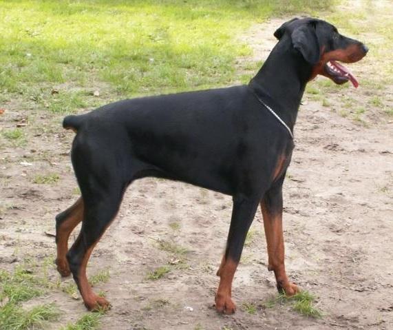 5-biologische-naturgesetze-hund in Startseite