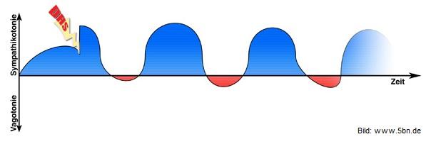 5-biologische-naturgesetze-kurve-dhs in Die 5 Biologischen Naturgesetze
