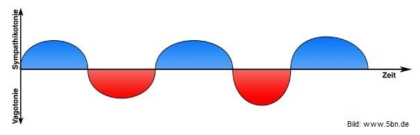 5-biologische-naturgesetze-kurve-normal in Die 5 Biologischen Naturgesetze