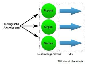 5-biologische-naturgesetze-psyche-organ-gehirn-300x227 in Die 5 Biologischen Naturgesetze